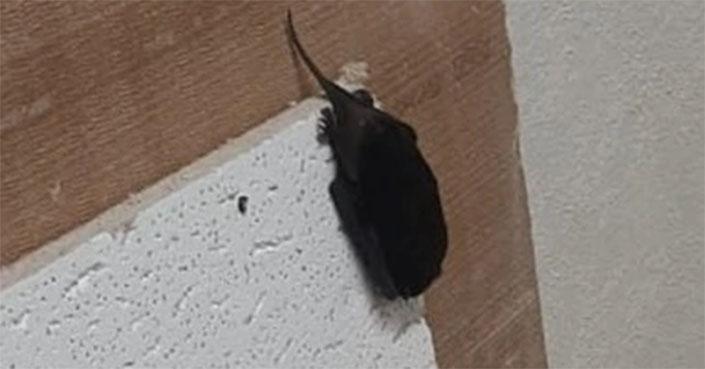 Profepa rescata murciélagos en edificio del SAT en Tamaulipas