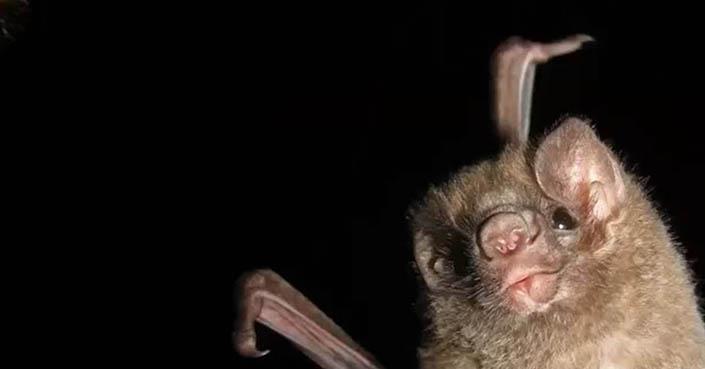 El Covid-19 no circula en ninguna especie de los murciélagos, afirma experto