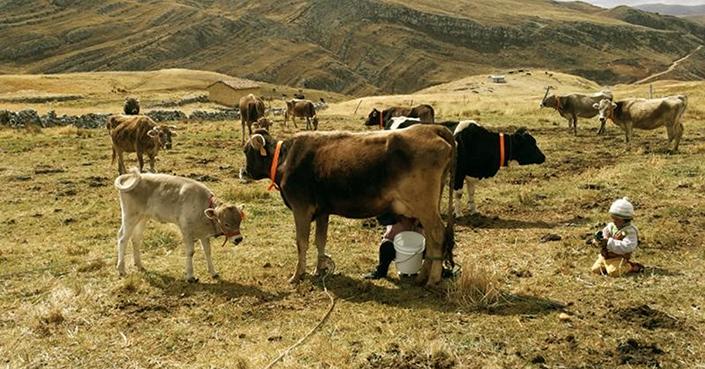 Implementa calculadora de carbón para estimar contaminantes por ganado